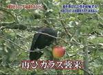 kakashi12.jpg